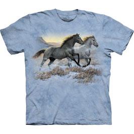 Horse Running Free
