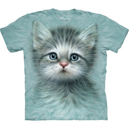 Blue Eye Kitten