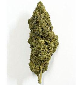 CBD Pine Tonic