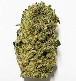 CBD Rock Bud