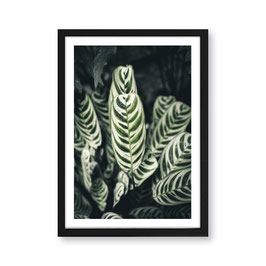 "Artprint ""leaves"""
