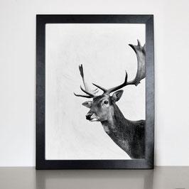 """Artprint """"HIRSCH"""""""
