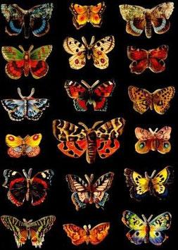 Glanz-Reliefbilder Schmetterlinge