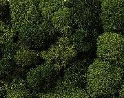Mix di lichene, verde COD: 08621