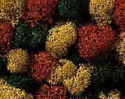 Lichene, Mix autunno XL COD: 08620