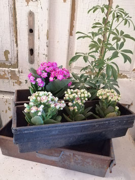 Gave oude bakkersvorm met 2 bakken, hier gestyled met planten, afmetingen 9 x 35 x 25 cm, prijs per stuk