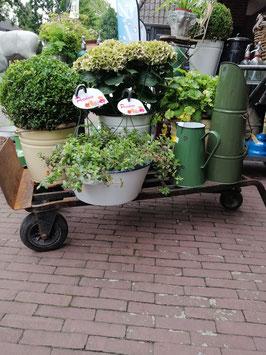 Oude ijzeren kar te gebruiken platte kar, schuine kar en als steekwagen. Nog goed te gebruiken maar ook erg leuk met potten erop en er omheen! Afm. 120 x 50 cm