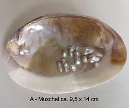 Muschelschale VENUS - mit eingewachsenen Süßwasserperlen