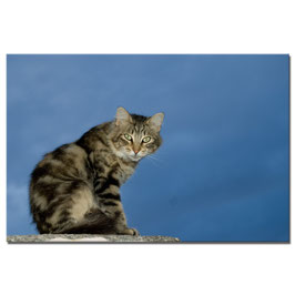 Gatto #1
