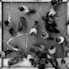 milano piccioni