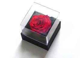 Rose in Geschenkbox mit Klarsichtdeckel Größe XL