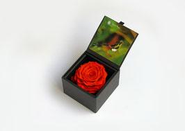 Einzelrose in Geschenkbox mit Deckel Größe XXL