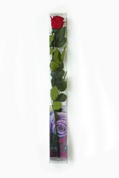 1 Rose mit Stiel 50 cm