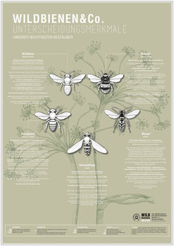 WILDBIENEN & CO. – das Plakat