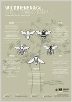 WILDBIENEN & CO. – das Plakat