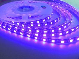 Светодиодная лента ультрафиолетовая SMD 5050 60 LED/m IP20(негерметичная)