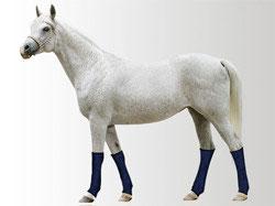 Beinkühler für Pferde pro Stück