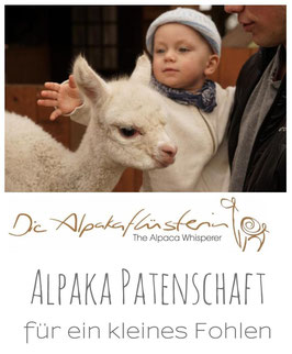 Alpaka-Patenschaft Premium