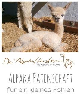 Mini Alpaka-Patenschaft