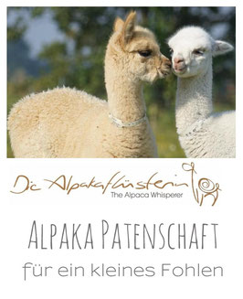 Alpaka-Patenschaft Plus (inkl. Farm Besuch)