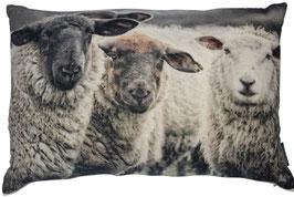 259 Schafe samt Kissen kompl. M.
