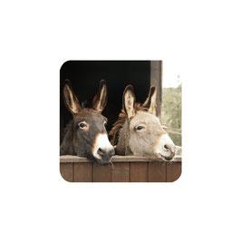 Untersetzter 2er Esel