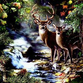 12 Ser. Deers on a Creeck