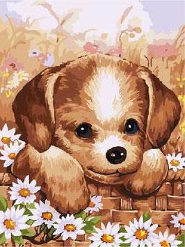 40×30-子犬と花