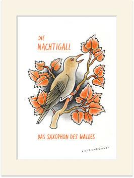Die Nachtigall – das Saxophon des Waldes