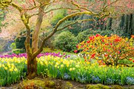 Дерево и цветы (П-115)