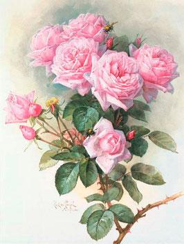 Розовые розы,  ЦП-8