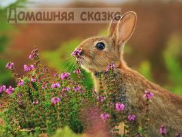 Зайчишка (Ж-11)