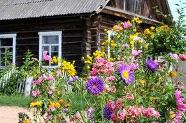 Цветы у дома (П-4)