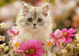Котенок с космеями (Ж-22)