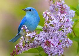 Голубая птичка и сирень (Ж-12)