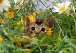 Котенок с ромашками  (Ж-18)