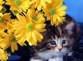 Котенок с желтыми цветами (Ж-9)