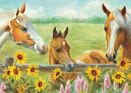 Лошадки (Ж-30)