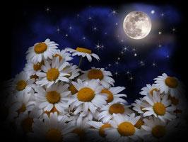 Ночь.Луна.Ромашки  (Ц-8)