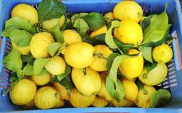 Limoni di Ribera