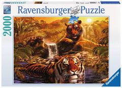 Le bain des tigres  (puzzle 2000 pièces)