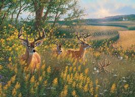 Summer deer
