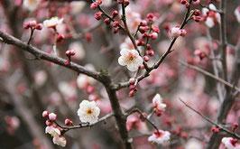 Ash 英語で学ぶ日本文化 in 関西