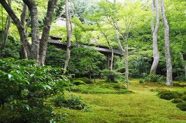 ガイディング・センスを磨く研修「嵯峨野・嵐山」