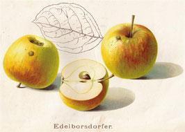 Edelborsdorfer