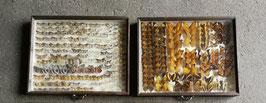 2er Set echte Schmetterlinge im Schaukasten aus Sammlung Set 10