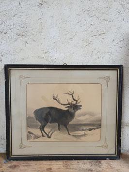altes Bild schwarz-weiß Zeichnung Hirsch Nr 2806