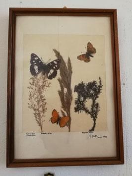 Schönes kleines Bild mit echten Schmetterlingen und Gräsern Nr gi-0503