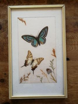 Schönes großes Bild mit echten Schmetterlingen und Gräsern Nr gi-0403