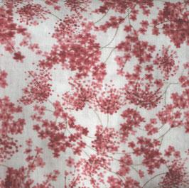 rote Hollerblüten